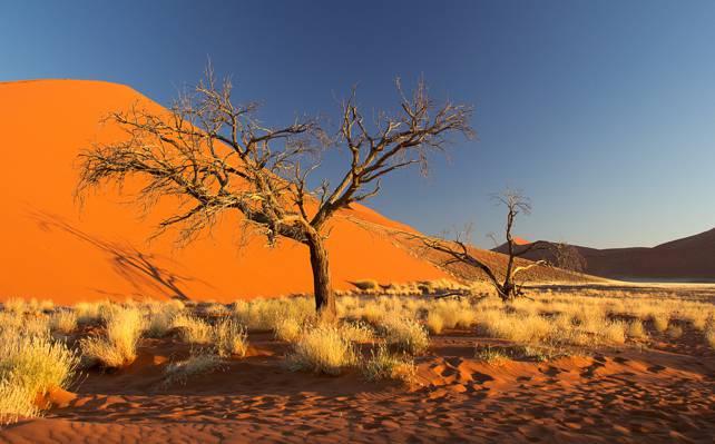 非洲,巴尔汗,灌木丛,沙地,树木,纳米布沙漠,天空,纳米比亚