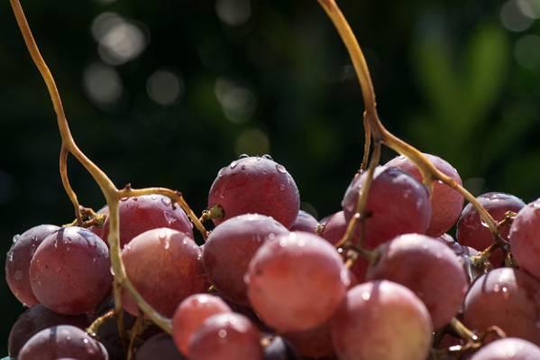 葡萄水果高清壁纸的特写照片