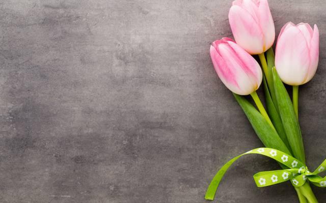 鲜花,静物,郁金香