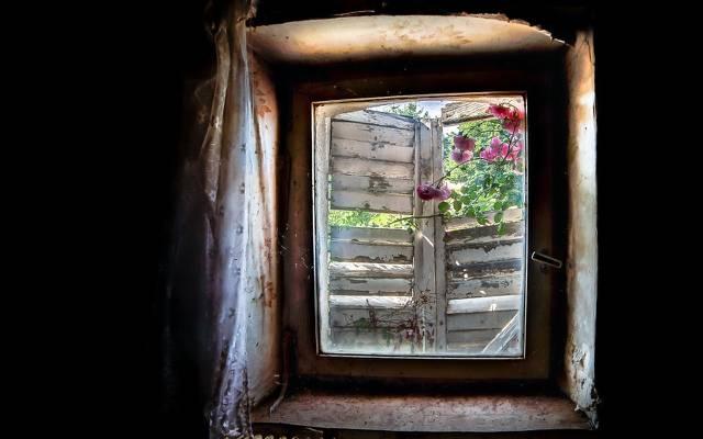 壁纸花,窗口,背景