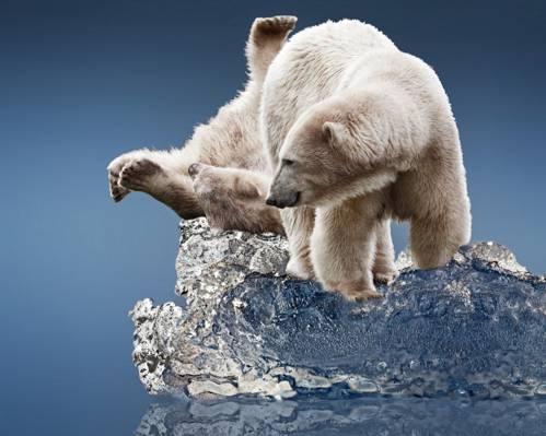 北极熊,冰,浮冰