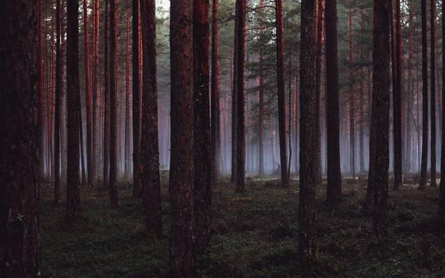 壁纸树木,木材,森林