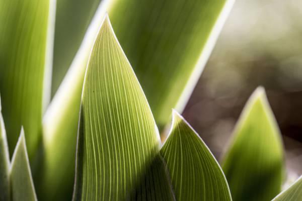 绿叶植物关闭摄影高清壁纸