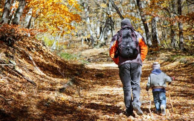 父亲和儿子,徒步旅行,孩子,森林,成人