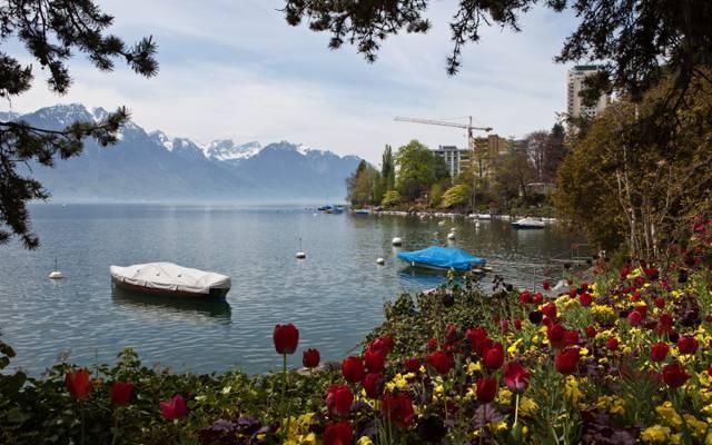瑞士,湖,山,自然,照片,蒙特勒,郁金香