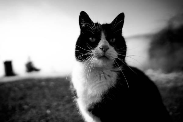 猫,看,胡子