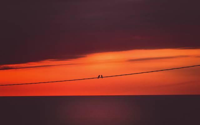 鸟,背景,日落