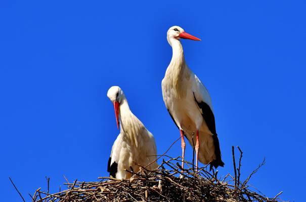 白色和黑色的鸟巢高清壁纸