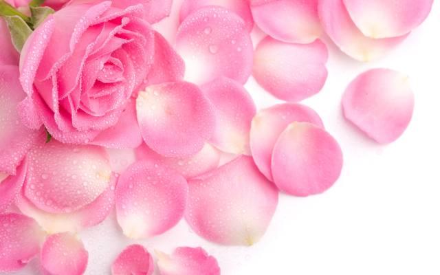 色彩鲜艳的玫瑰