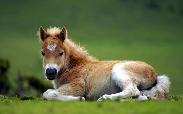 马驹,马,性质