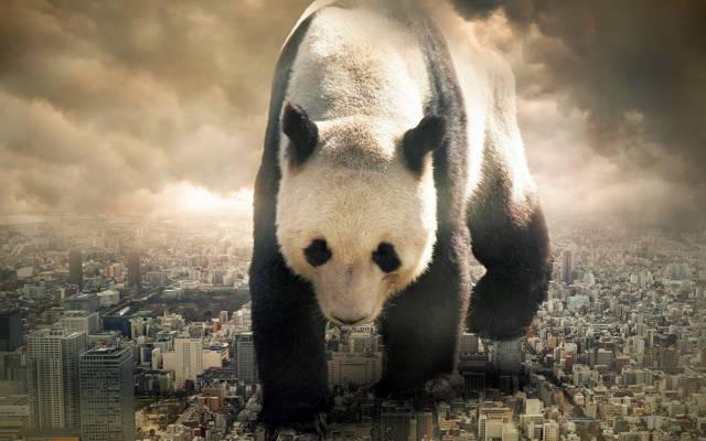熊猫,这个城市的情况