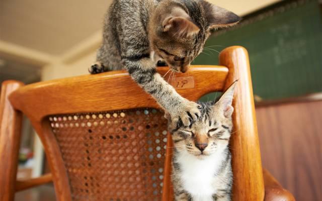 游戏,爪子,椅子,猫