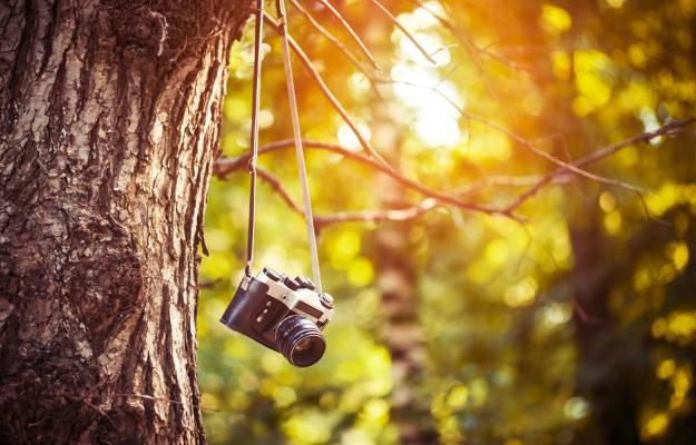 早上,相机,宽屏,一天,树叶,模糊,高清壁纸,壁纸,树叶,不同,绿色,相机,...  -