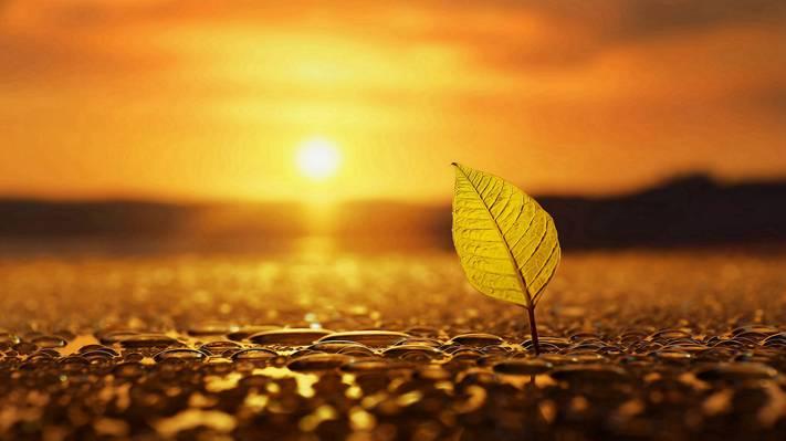 夕阳黄昏下的那一片叶子