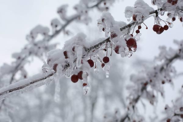 冬季浆果在浅焦点镜头高清壁纸