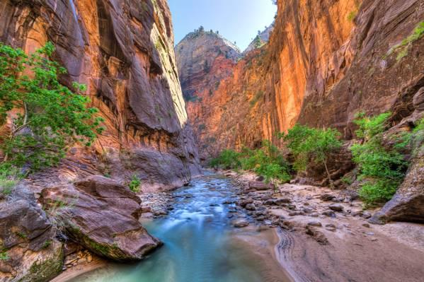 锡安国家公园,美国,峡谷,树木,峡谷,犹他州,岩石,河流,石头