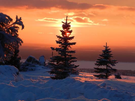 树,冬天,雪,日落