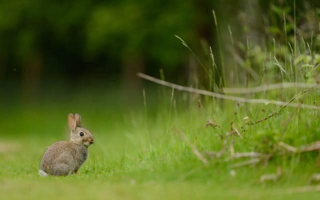 夏天,兔子,性质
