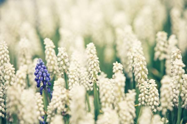 白色和紫色的花朵高清壁纸的照片