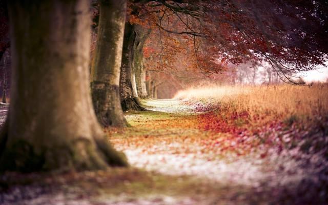 自然,树,径,路径,秋,树,径,森林