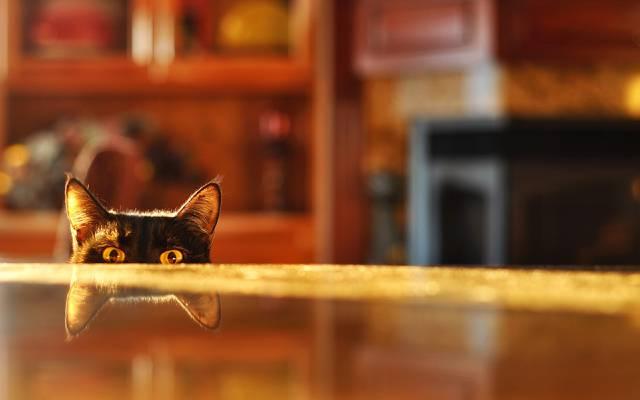 房间,模糊,从事间谍活动,表,反射,猫
