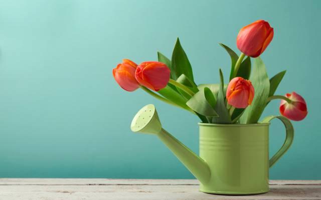 鲜花,湖,表,背景,红色,绿色,郁金香