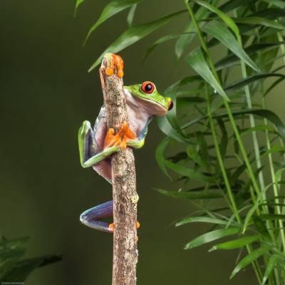 在棕色木分支的绿色青蛙HD墙纸