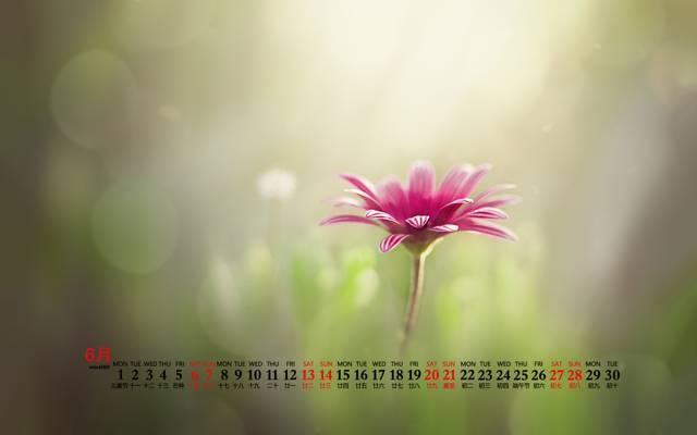 2020年6月小清新唯美花朵桌面日历壁纸
