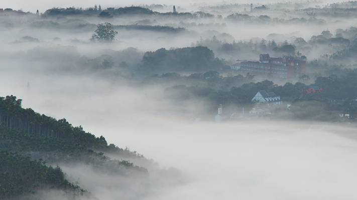 树和房子在雾气候高清壁纸