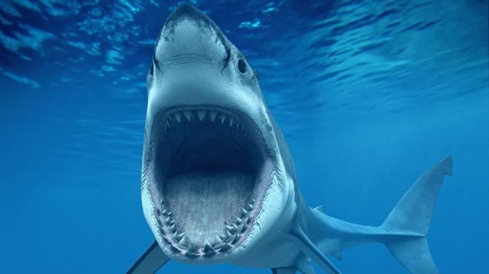 凶猛的大鲨鱼