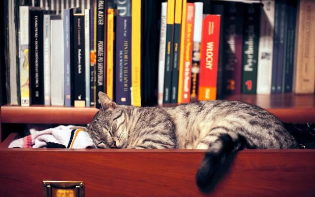 壁纸猫,书籍,衣服,衣柜,睡眠,架子