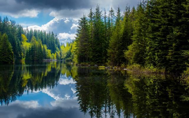 不列颠哥伦比亚省,湖,森林,反思,加拿大,春天