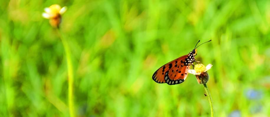 倾斜镜头摄影的蝴蝶高清壁纸