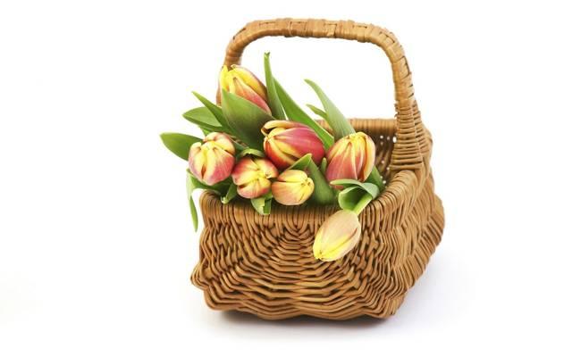 篮子,郁金香,芽