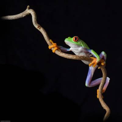 绿色和紫色青蛙高清壁纸的特写照片