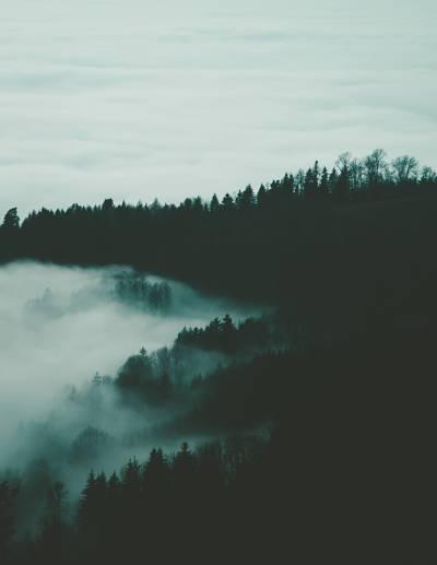 树与雾高清壁纸的剪影