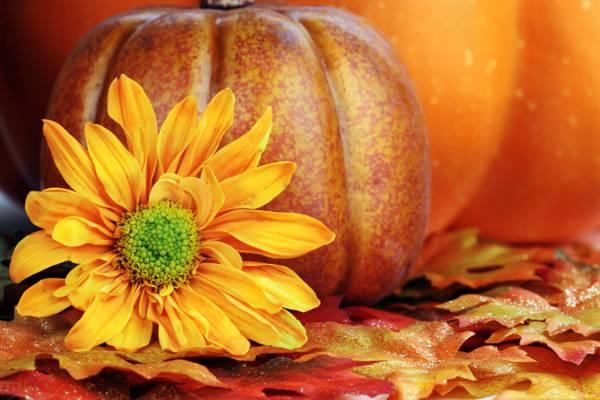 南瓜,花瓣,黄色,秋天,花,叶子