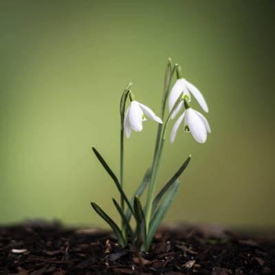 宏观摄影的白色花瓣植物高清壁纸