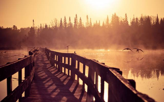 早上,夫妻,大自然,雾,鸭,鹅,快乐,河流