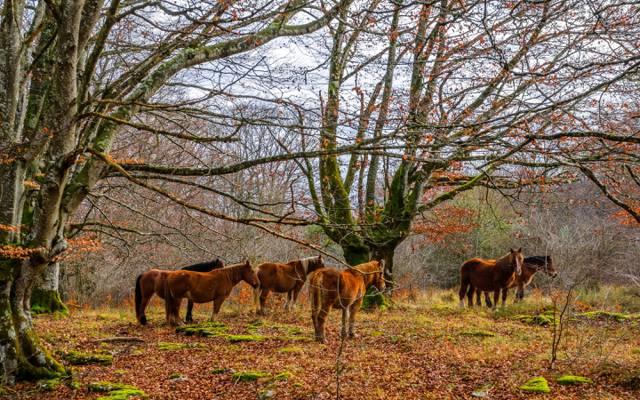 森林,树木,马,秋天,青苔,叶子