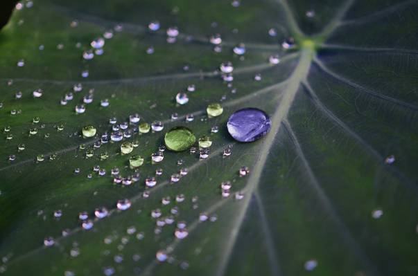 微距拍摄的叶子高清壁纸上的水滴