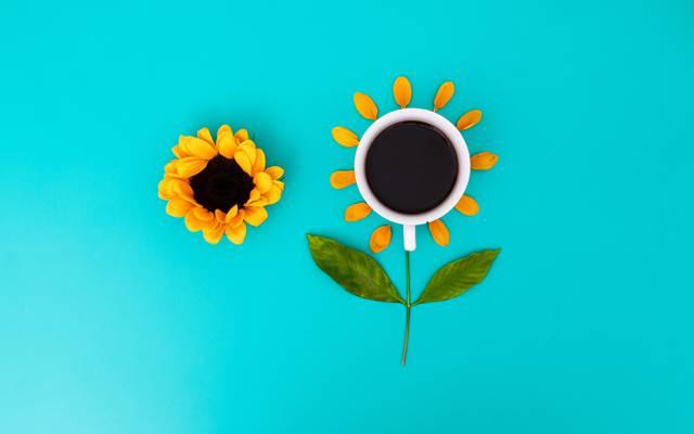 花,宏观,从顶部的看法,杯,叶子