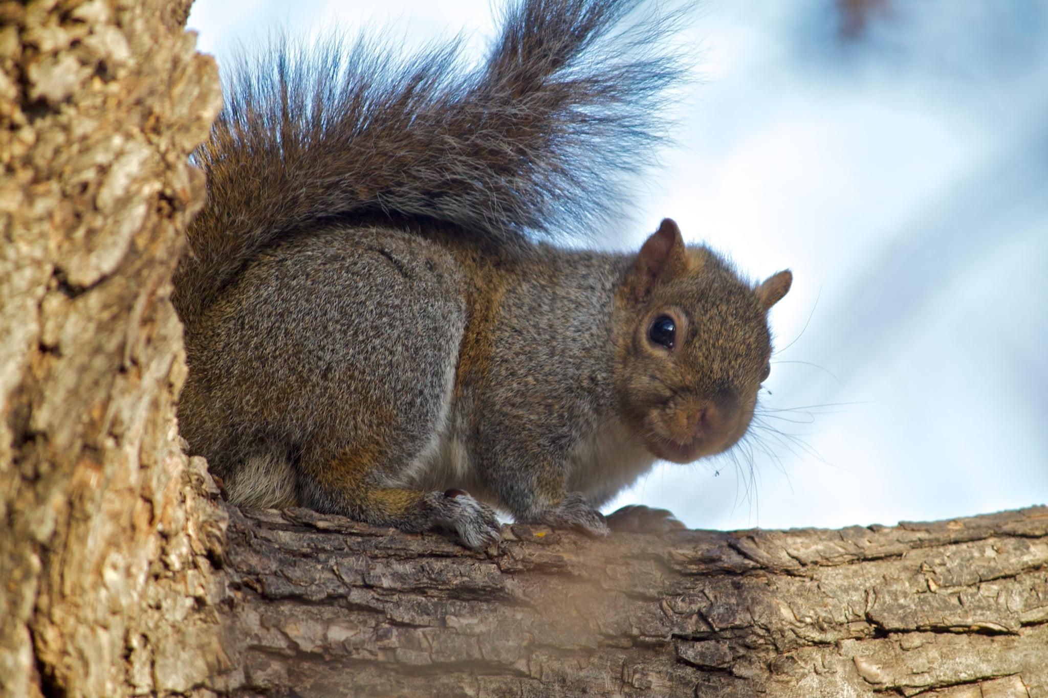 棕色的松鼠,在白天的高清壁纸树枝上的选择性焦点摄影